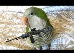 Enlace a El pájaro más peligroso del mundo