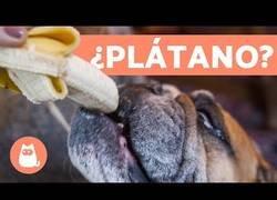 Enlace a Fruta y verdura para perros