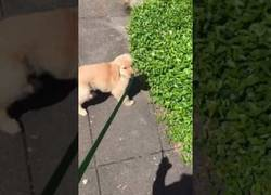 Enlace a Cachorro se lleva un susto