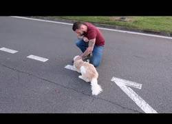 Enlace a Perro viaja 5.000 km para encontrarse con su dueño [Inglés]