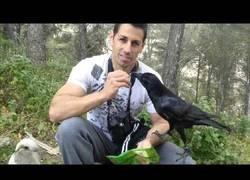 Enlace a La amistad con un cuervo