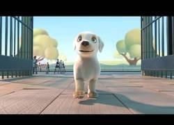 Enlace a Corto de animación: Pip