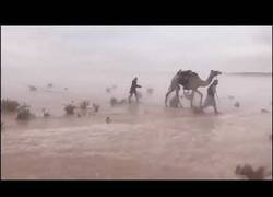 Enlace a Así se ve el desierto inundado