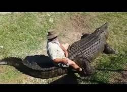 Enlace a Este australiano se sube en el cocodrilo como si fuera un caballo