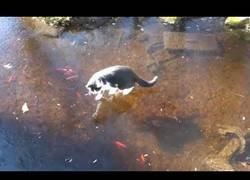 Enlace a Los gatos no llevan muy bien la combinación de hielo y peces