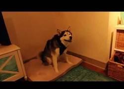 Enlace a El perro con los estornudos más monos