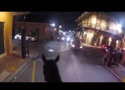 Enlace a Oficial montado en Nueva Orleans persigue a un sospechoso a caballo