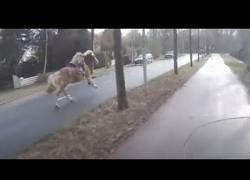 Enlace a Un scooter ayuda a atrapar un caballo espantado