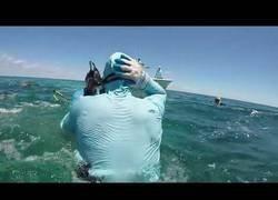Enlace a Tiburón ataca a un buzo - Fotos incluidas