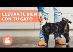 Enlace a ¿Cómo llevarte bien con tu gato?