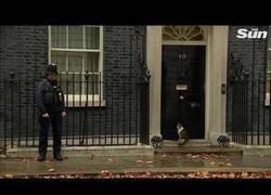 Enlace a Policia deja entrar a un gato a casa del primer ministro inglés