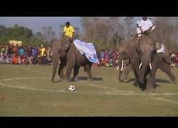 Enlace a Elefantes juegan al fútbol en Nepal