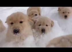 Enlace a Perros y nieve, videos para alegrarte la mañana
