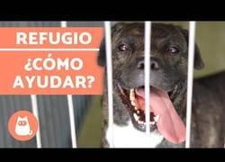 Enlace a ¿Cómo ayudar en un refugio de animales?