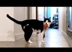 Enlace a ¿Tus gatos te echan de menos? Esto es lo que hacen cuando no estás en casa