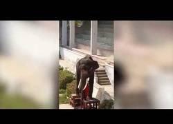 Enlace a Elefante anoréxico haciendo exhibiciones en un circo [Duras imágenes]