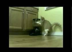 Enlace a Gato vs dosificador de comida