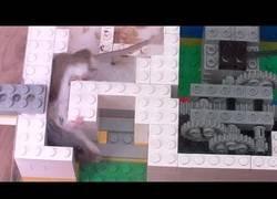 Enlace a Experimentando con la inteligencia de los ratones