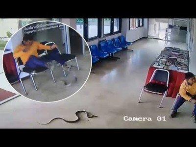 Serpiente entra en una comisaría y ataca a un hombre