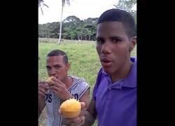 Enlace a Los profesionales comiendo mango