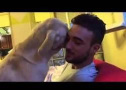 Enlace a La manera más tierna de pedir perdón la tiene este perro