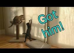 Enlace a Juegos de gatos