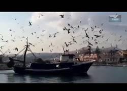 Enlace a Pájaros atacan un barco en el puerto