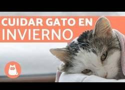 Enlace a ¿Cómo proteger a tu gato del frío?