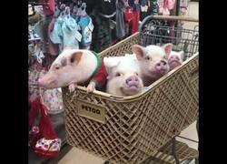 Enlace a 4 cerditos en un carrito de compras