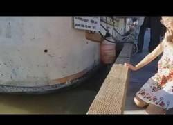 Enlace a Shooting Stars Meme - León marino arrastra a una niña al agua