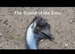 Enlace a Sonido real de un emu