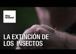 Enlace a La extinción de los insectos