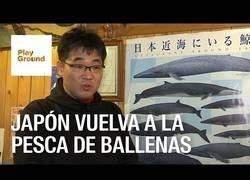 Enlace a Japón vuelva a la pesca de ballenas