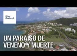 Enlace a Martinica: Un paraíso de veneno y muerte