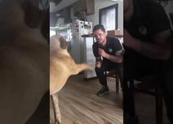 Enlace a Conversación entre perro y su dueño