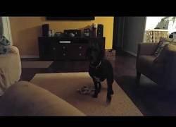 Enlace a El ataque sorpresa del perro