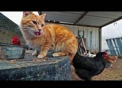 Enlace a El gato que se creía gallina