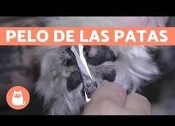 Enlace a ¿Cómo cortar el pelo de las patas de un perro?