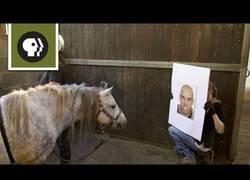 Enlace a ¿Pueden los caballos reconocer nuestras expresiones?