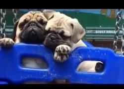 Enlace a Los perros más monos, dosis de ternura de buena mañana