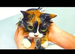 Enlace a Trucos para los dueños de gatos