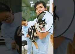 Enlace a Este perro odia por completo las inyecciones y lo hace saber muy bien