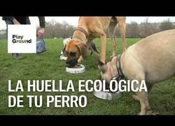 Enlace a Como reducir la huella ecológica de tu perro