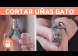 Enlace a Cómo cortarle las uñas a un gato