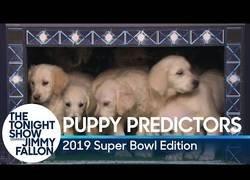 Enlace a Los perritos que trataron de predecir el resultaod de la Super Bowl de 2019