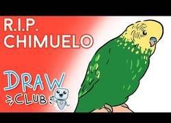 Enlace a El trágico final del pájaro Chimuelo