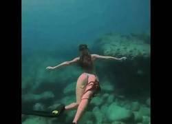 Enlace a Este pulpo se agarra en el mejor lugar posible para viajar por el fondo del mar