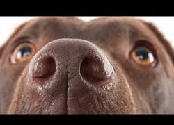 Enlace a ¿Pueden los perros oler el miedo?