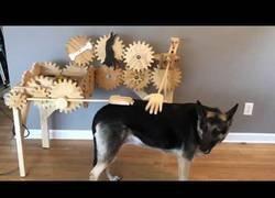 Enlace a La máquina 'perfecta' para darle caricias a tu perro