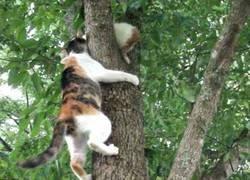 Enlace a Rescate de gatito del árbol